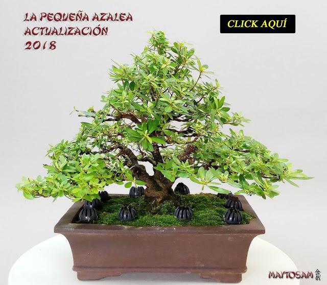 http://maytosam.blogspot.com/2012/06/la-pequena-azalea.html