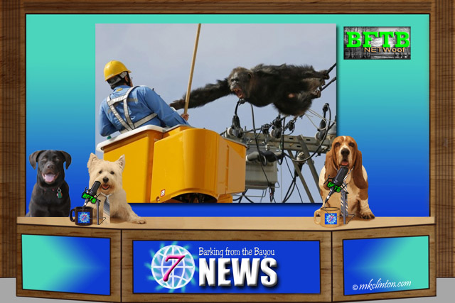 BFTB NETWoof News set with chimp on power line screen shot
