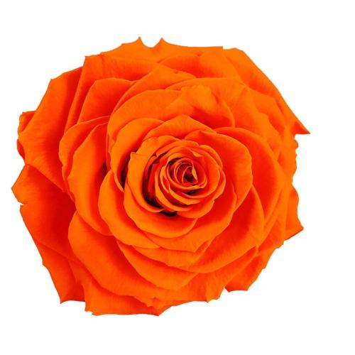 Significado de la rosa color naranja