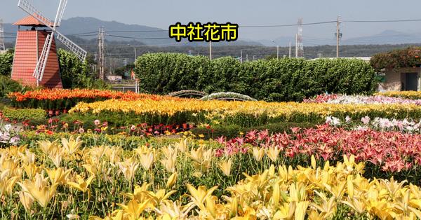 台中后里|中社觀光花市|百合花和數十種花海美翻天