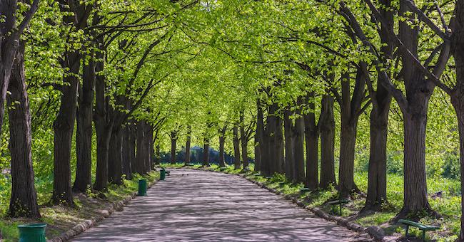 Italia nostra sezione treviso piantare e 39 meglio che - Alberi adatti per viali ...