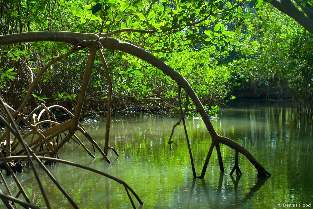Makalah Ekosistem Manggrove
