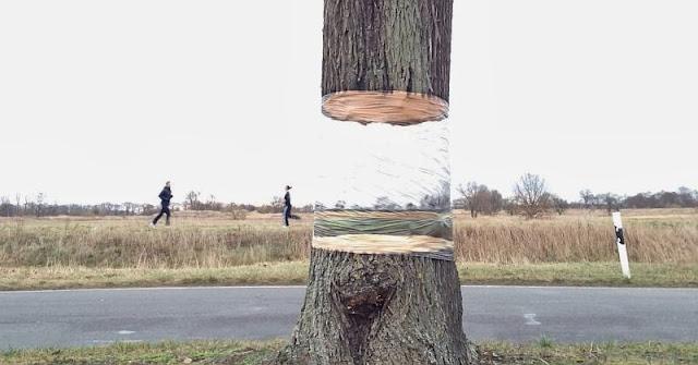 StreetArt in Potsdam von Daniel Siering und Mario Shu - Der schwebend geteilte Baum