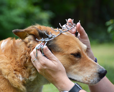 Petsmart plastic buckle pinch collar
