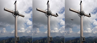 Dohlen am Gipfelkreuz der Krähe - erst 1, dann 2, dann 3