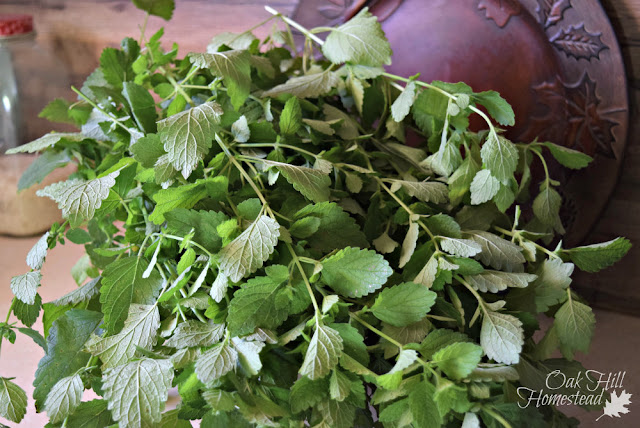 Have you ever used lemon balm to make lemonade?