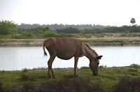 Ich mag Esel - I like donkeys