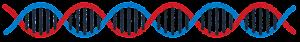DNAのライン素材(短い)
