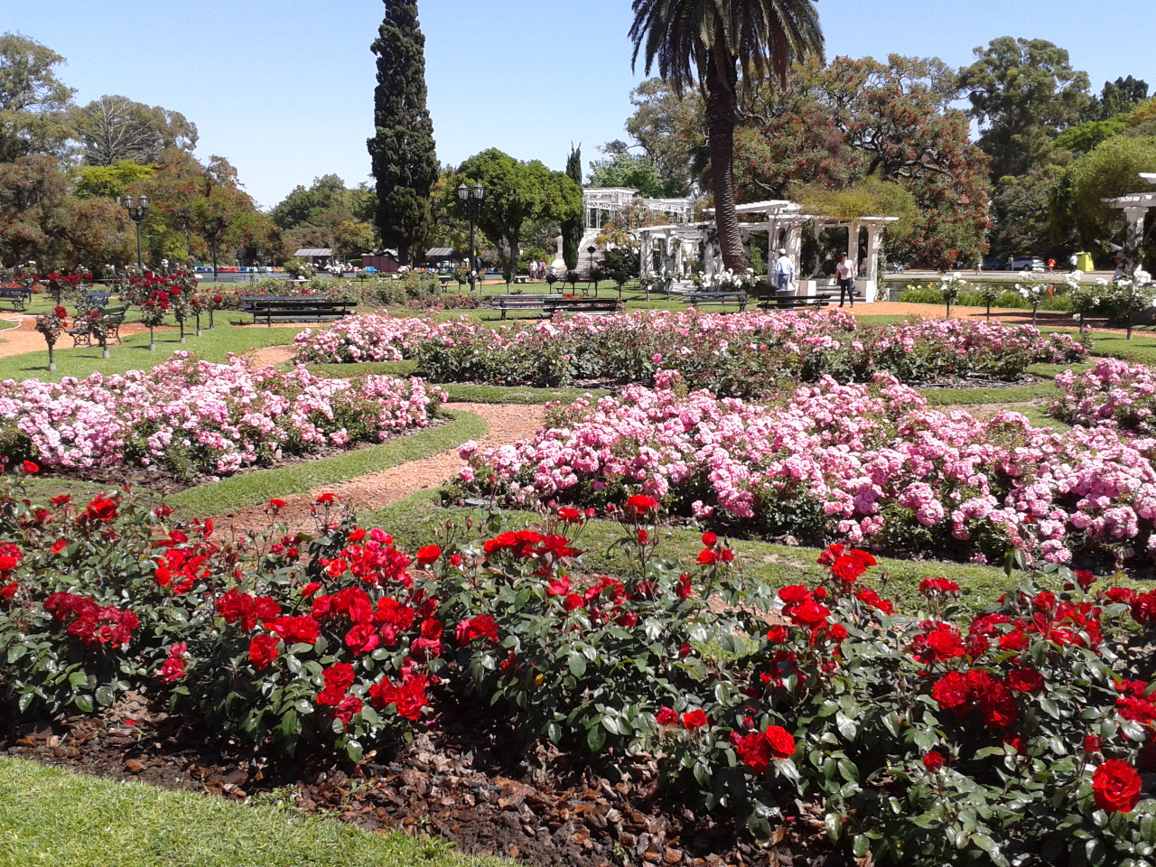 Palermo Rose Garden  Iconic Buenos Aires
