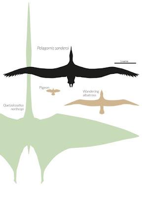 El mayor animal volador que ha existido