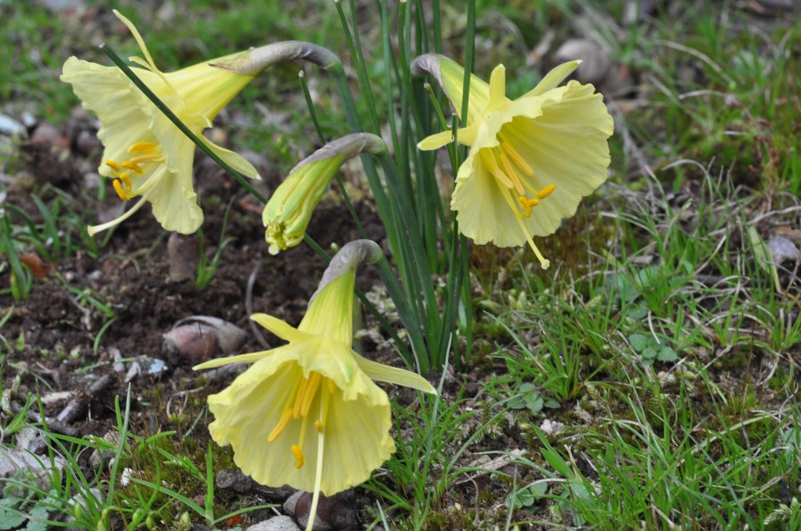 alpine garden society victorian group