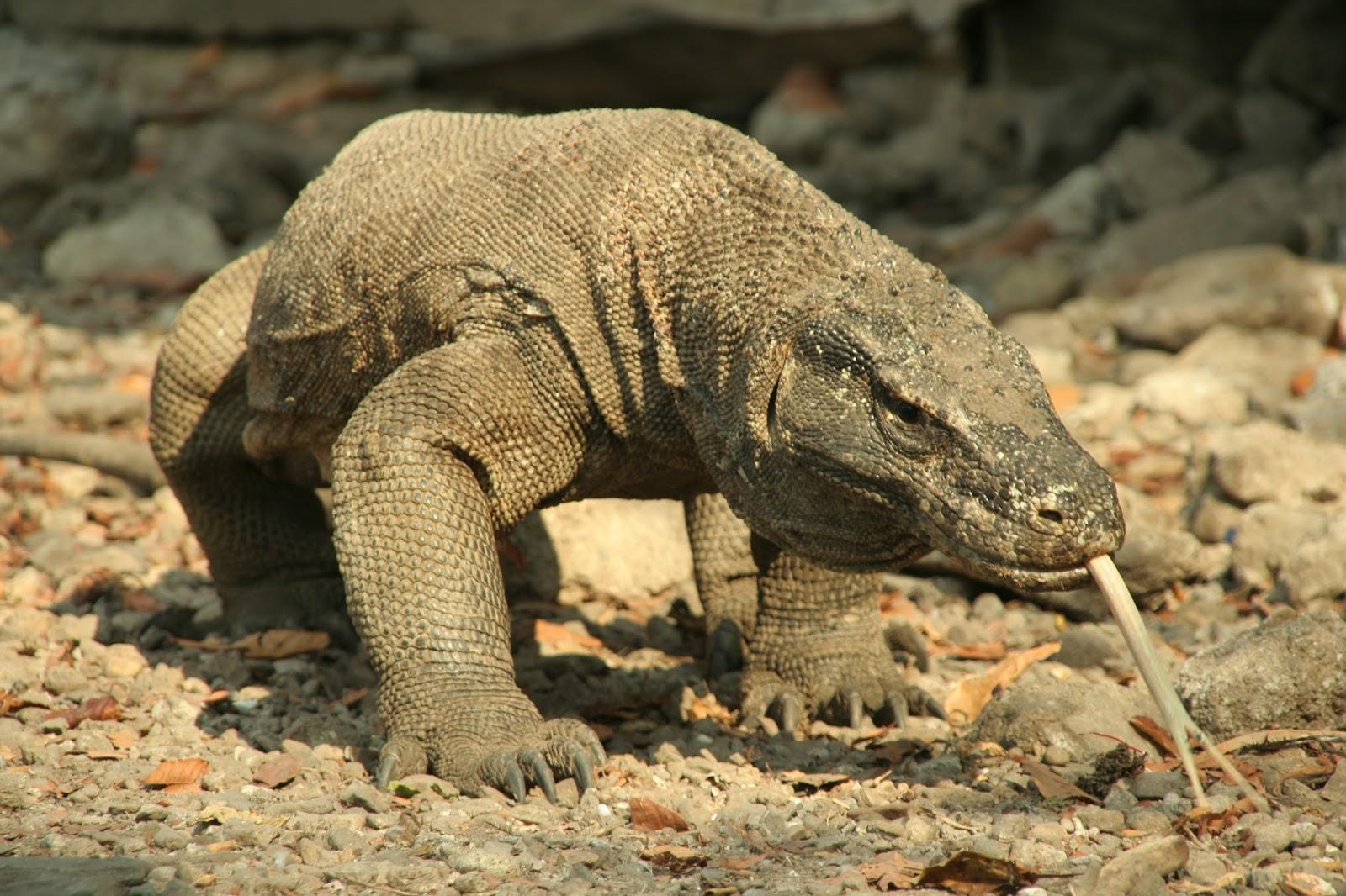 Explore Taman Nasional Komodo