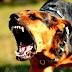 Durazno entre los departamentos con más denuncias de ataques de perros a personas