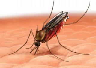 Cara Mengusir Nyamuk Dengan Cara Tradisional