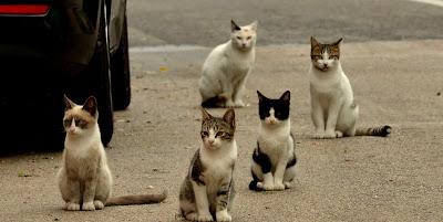 Mitos jika tiba-tiba menabrak seekor kucing