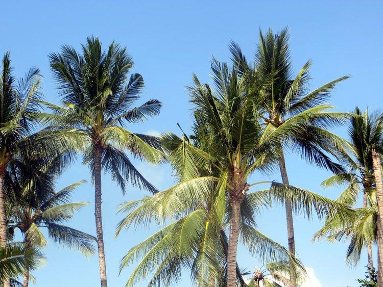 Пальмы над головой