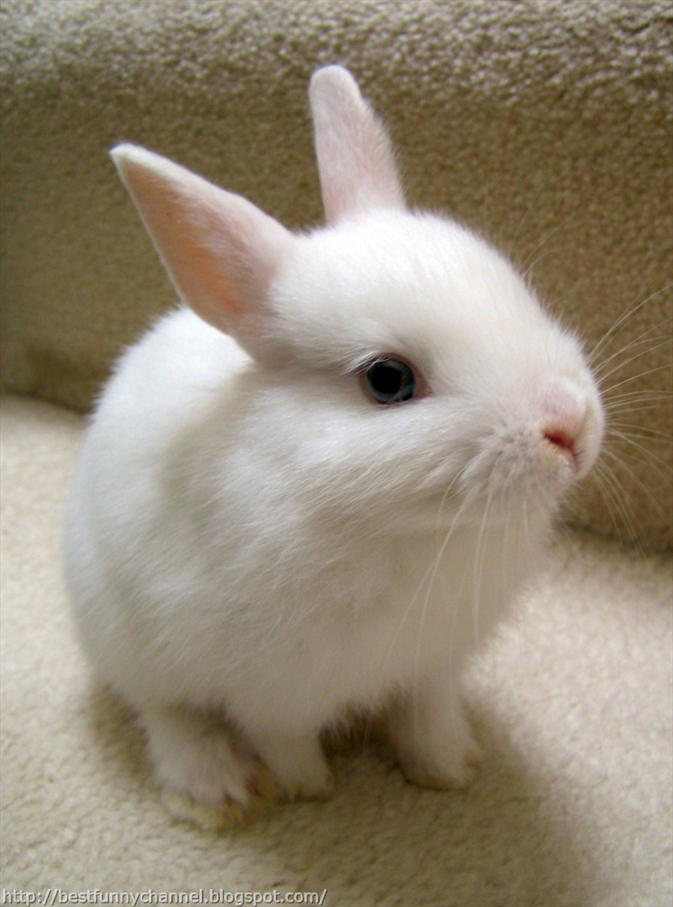 Cute and funny pictures of animals 64. Bunnies 8.