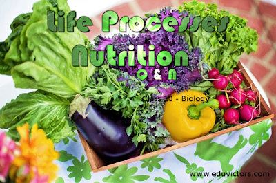 CBSE Class 10 - Biology - Life Processes (Nutrition) - Q and A (#cbsenotes)