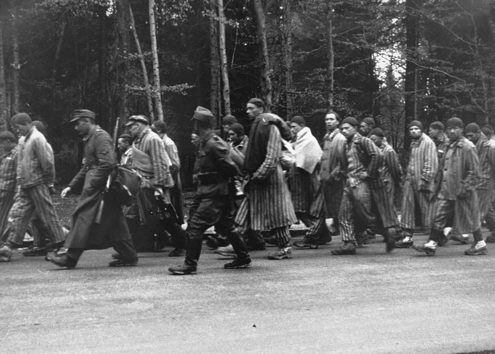 Prisoners on a death march from Dachau move towards the south along the Noerdliche Muenchner Street in Gruenwald, Germany, on April 29, 1945. Many thousands of prisoners were marched forcibly from outlying prison camps to camps deeper inside Germany as Allied forces closed in. Thousands died along the way, anyone unable to keep up was executed on the spot. Pictured, fourth from the right, is Dimitry Gorky who was born on August 19, 1920 in Blagoslovskoe, Russia to a family of peasant farmers. During World War II Dmitry was imprisoned in Dachau for 22 months. The reason for his imprisonment is not known. Photo released by the U.S. Holocaust Memorial Museum