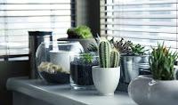usaha tanaman hias, bisnis tanaman hias, bisnis tanaman, usaha tanaman, tanaman hias, bisnis bunga