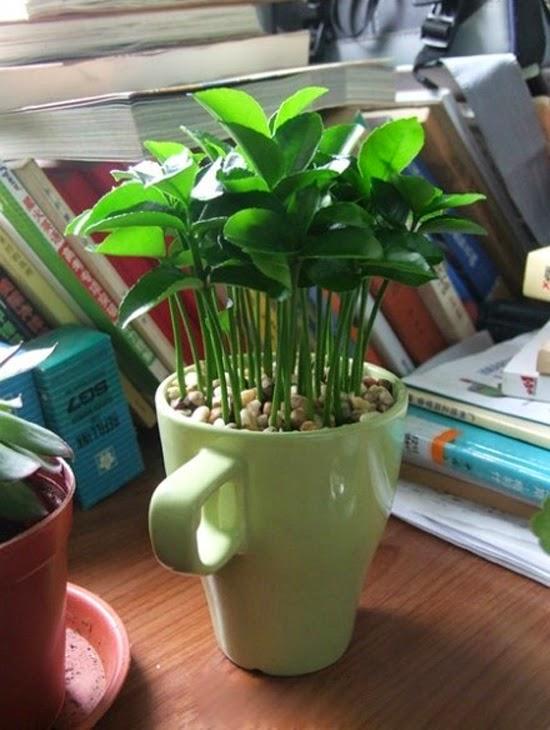 Manualidades con ni os haz una maceta con plantas de for Oficinas decoradas con plantas