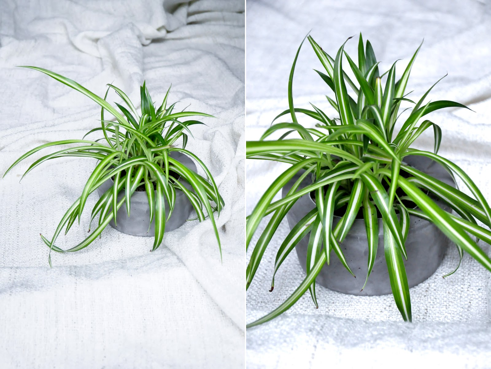 https://blogdogdaysofsummer.blogspot.co.at/2015/05/diy-conrete-planter.html?showComment=1433058768099#c7199877709550843465