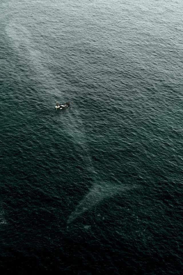 Una barca al mar, amb una balena blava sota