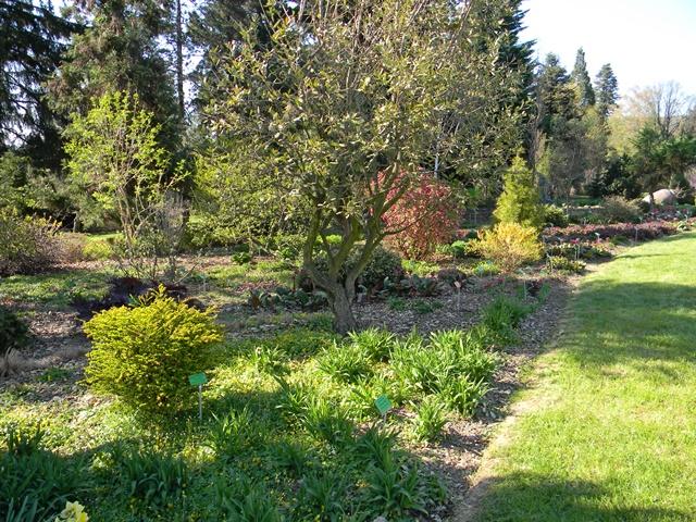 Arboretum w Wojsławicach wiosną  jest bardzo kolorowe.