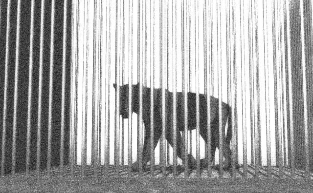 Der Blaue Federkiel Gedichtanalyse Der Panther Rilke