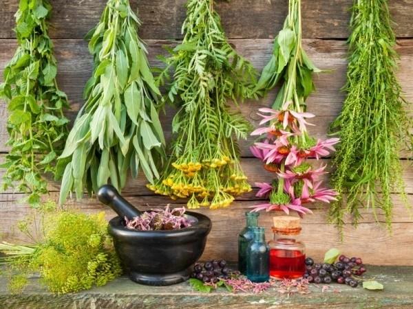 manfaat herba