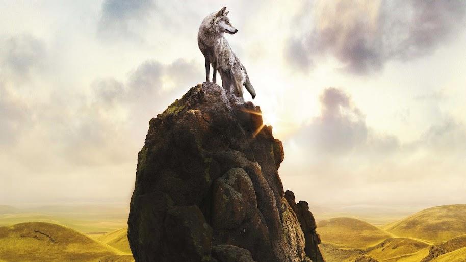 Wolf, 4K, 3840x2160, #51