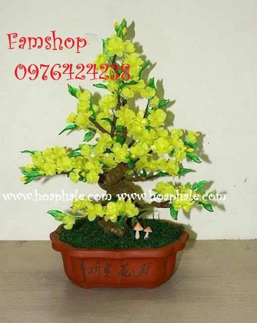 Goc bonsai cay hoa mai o Pham Hung