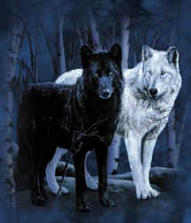 The Alaskan Muse: The White Wolf vs  The Black Wolf