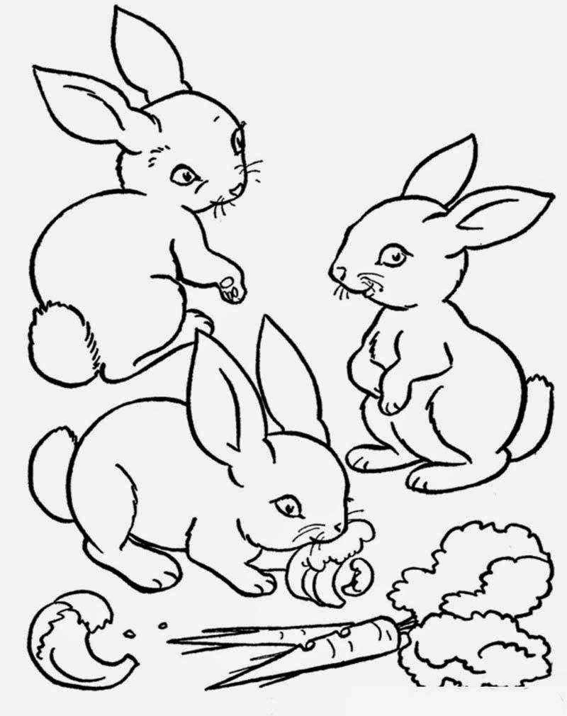 Menggambar dan Mewarnai Kelinci