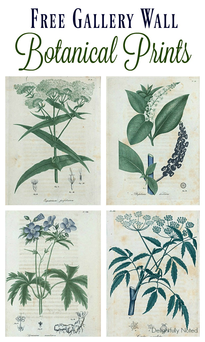 botanical prints free