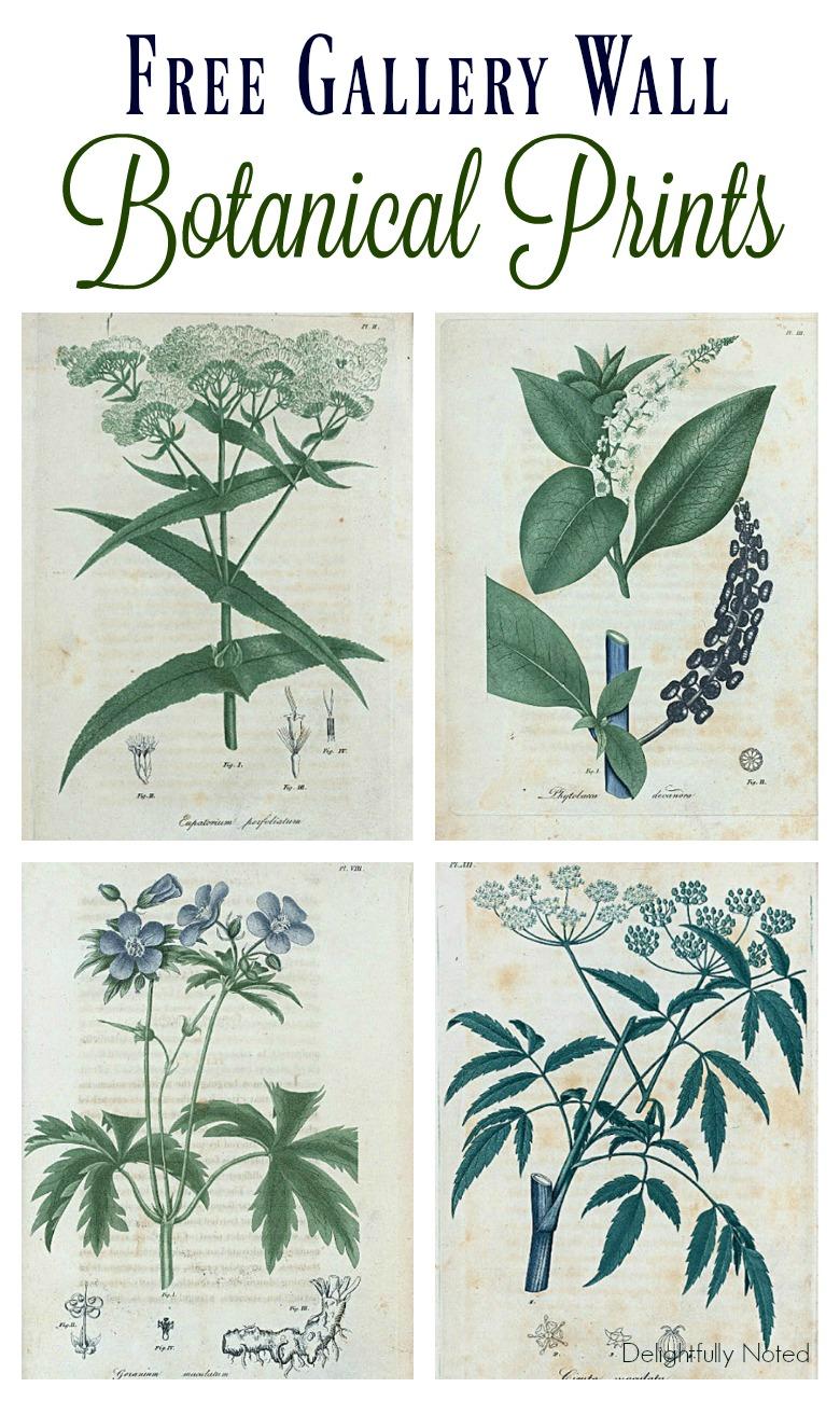 Free Botanical Art Prints Delightfully Noted
