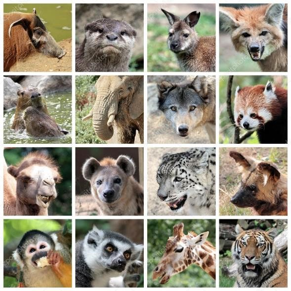 Imágenes Animales Mamíferos