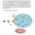 Quản lý truy cập mạng dựa trên NAP