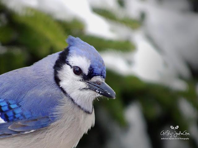 Bird Photgraphy