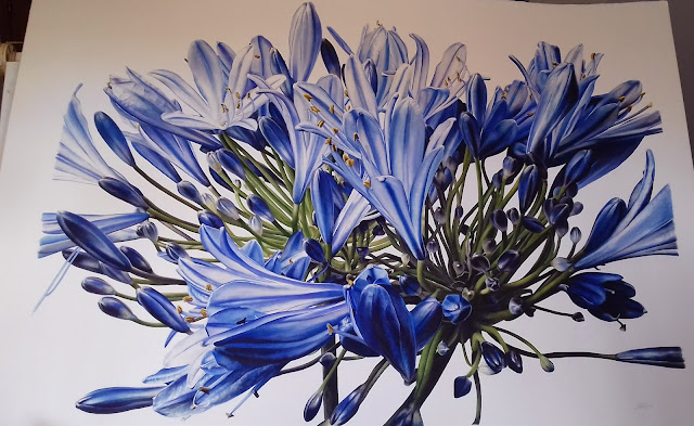Botanical art by Jess Shepherd - agapanthus