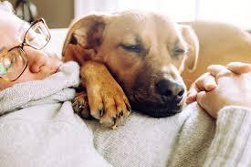 Conseils impressionnants pour tous les propriétaires d'animaux, Hacks de vie simples pour les propriétaires de chiens