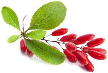 Berberina migliora nefropatia diabetica