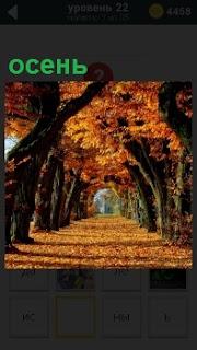 Прекрасная аллея осенью в свете солнечных лучей и дорога покрыта опавшими листьями