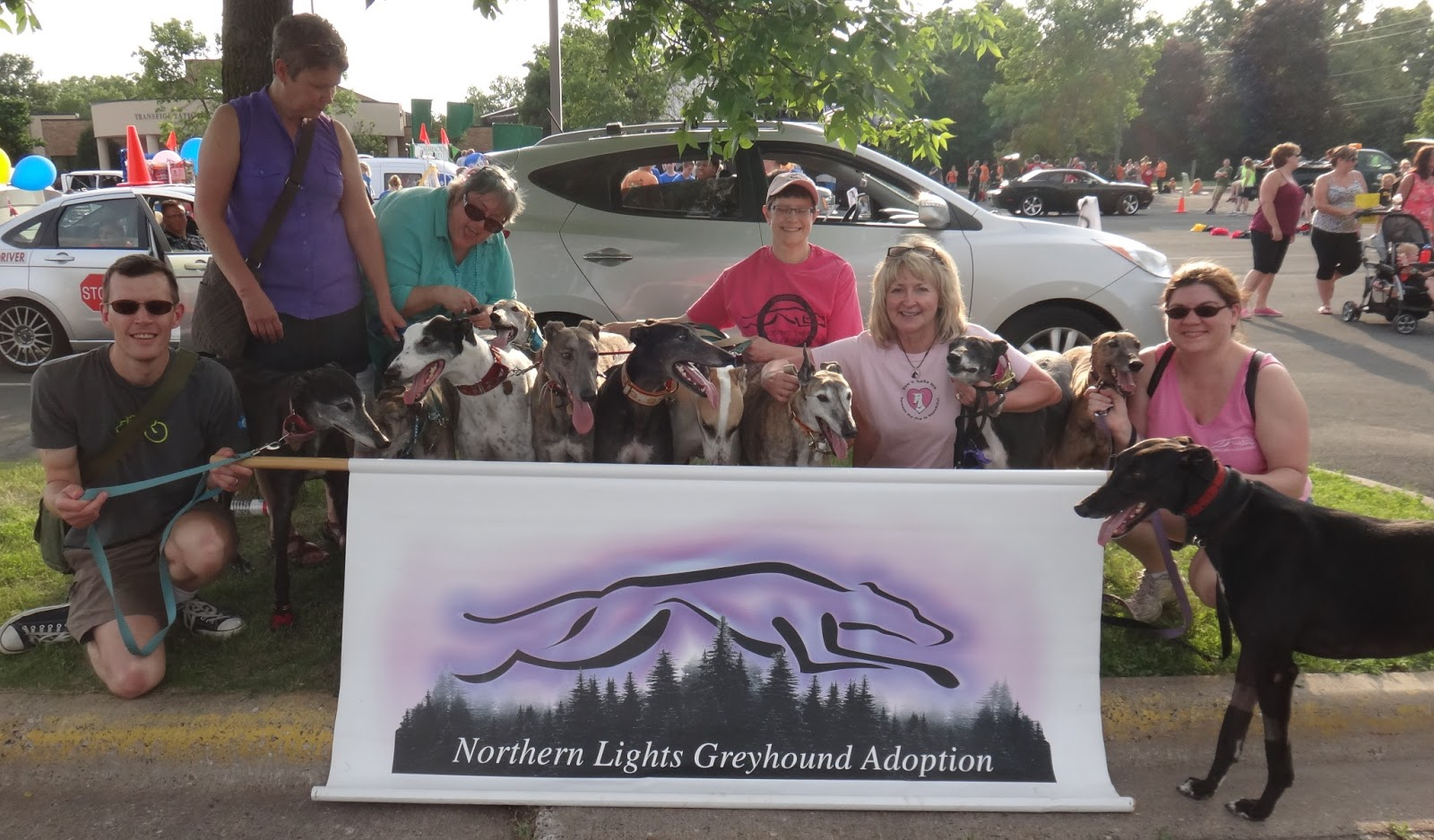 Northern Lights Greyhound Adoption