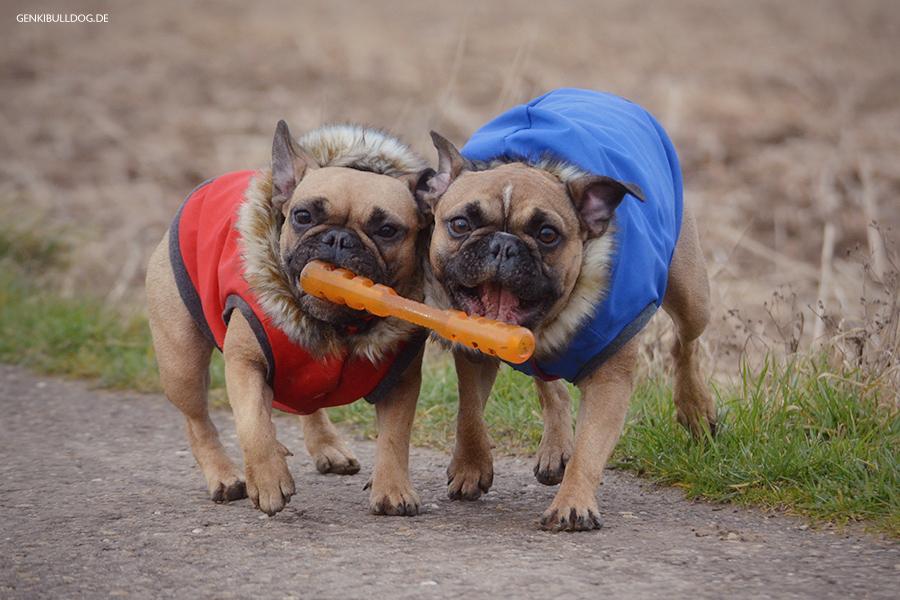 Hundeblog Französische Bulldogge Bully