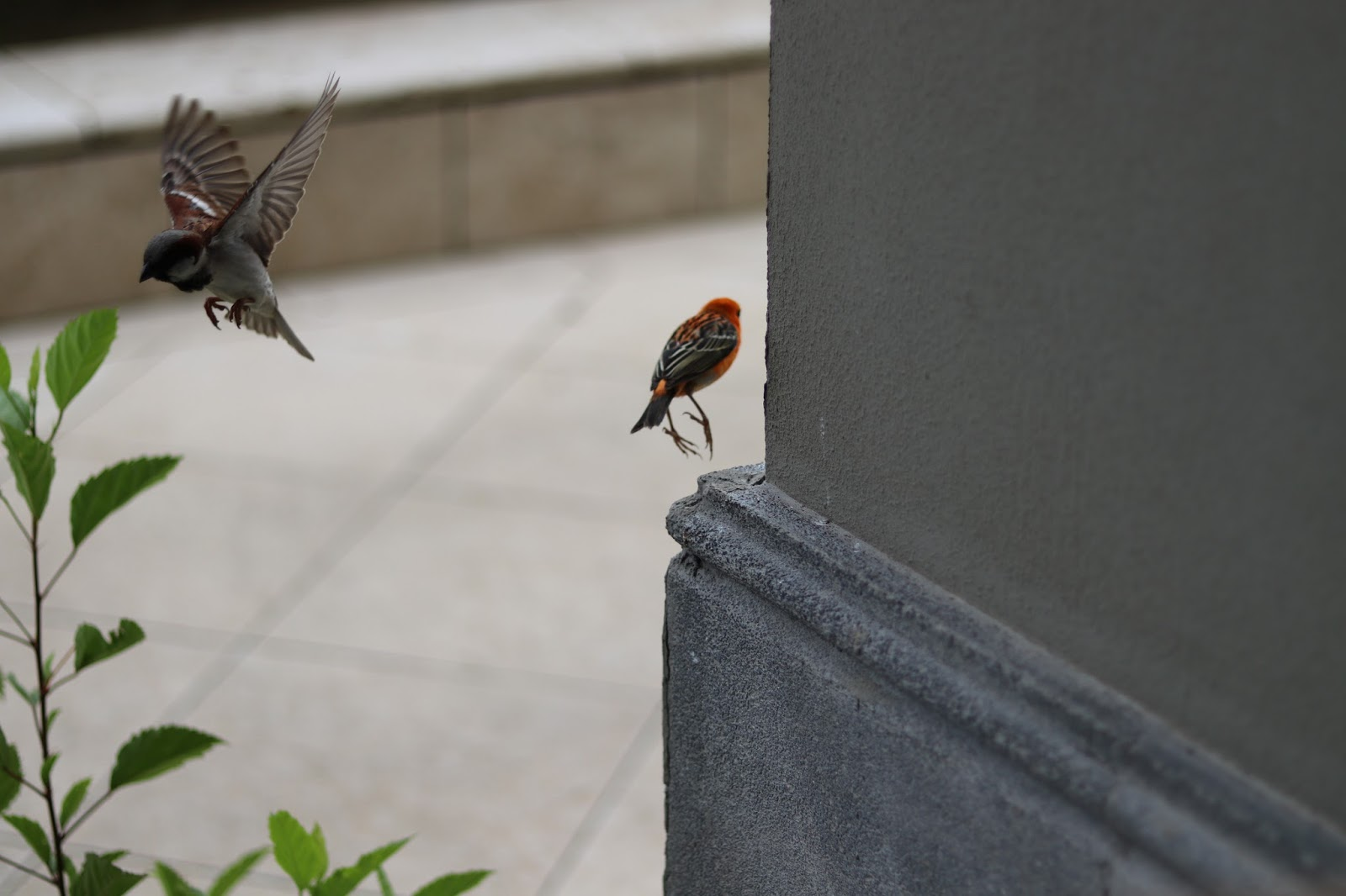 St Regis Breakfast Mauritius Birds