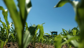 Mexico Threatens To Ditch US Corn Imports