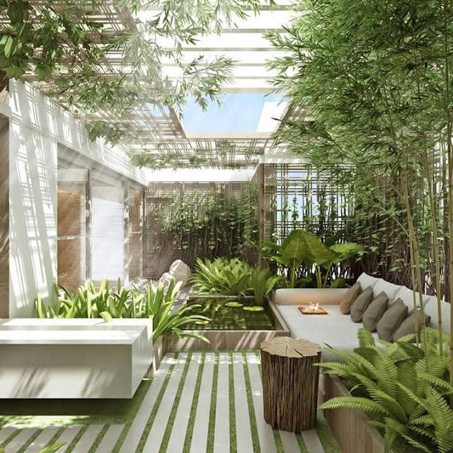 Inspirasi Teras Belakang Rumah dengan pohon bambu hias
