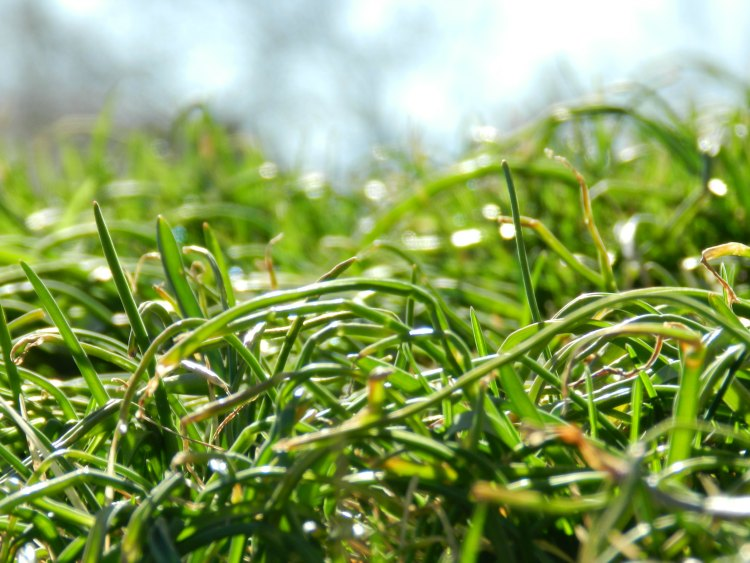 Green Grass Photograph: Grow Creative
