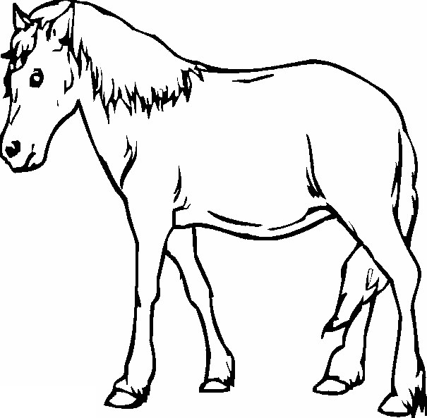 Download Mewarnai Gambar Kuda